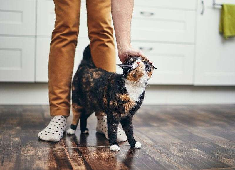 Build a sense of independence in your pet to ease them into the big changes to come.