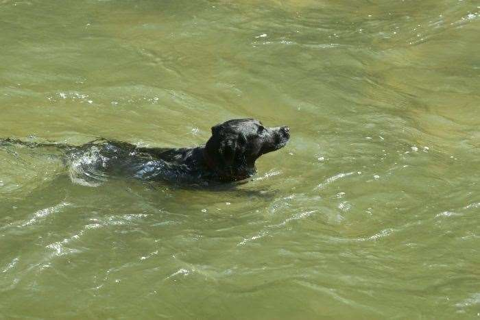 Three dogs died on Monday after swimming in an affected pond.